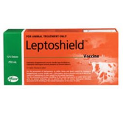 Protect your cattle and yourself against leptospirosis